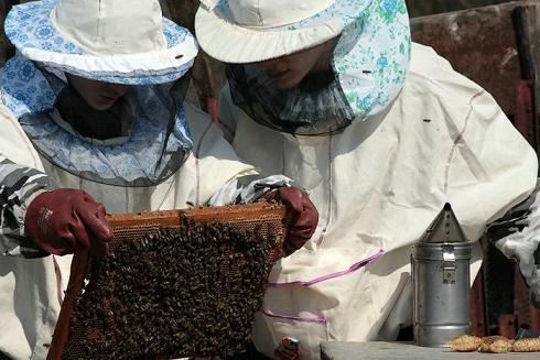 пчеловодство к какому виду деятельности относиться