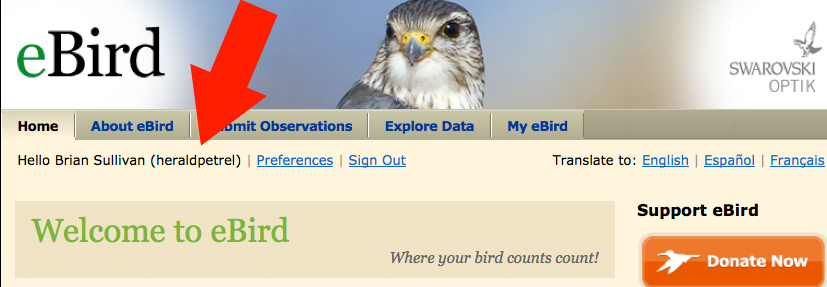 On the eBird home page, your user name is displayed when you're logged in. See below.