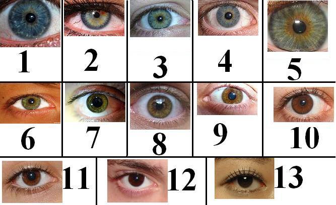 Pictures Of Eye Color Names Kidskunstfo